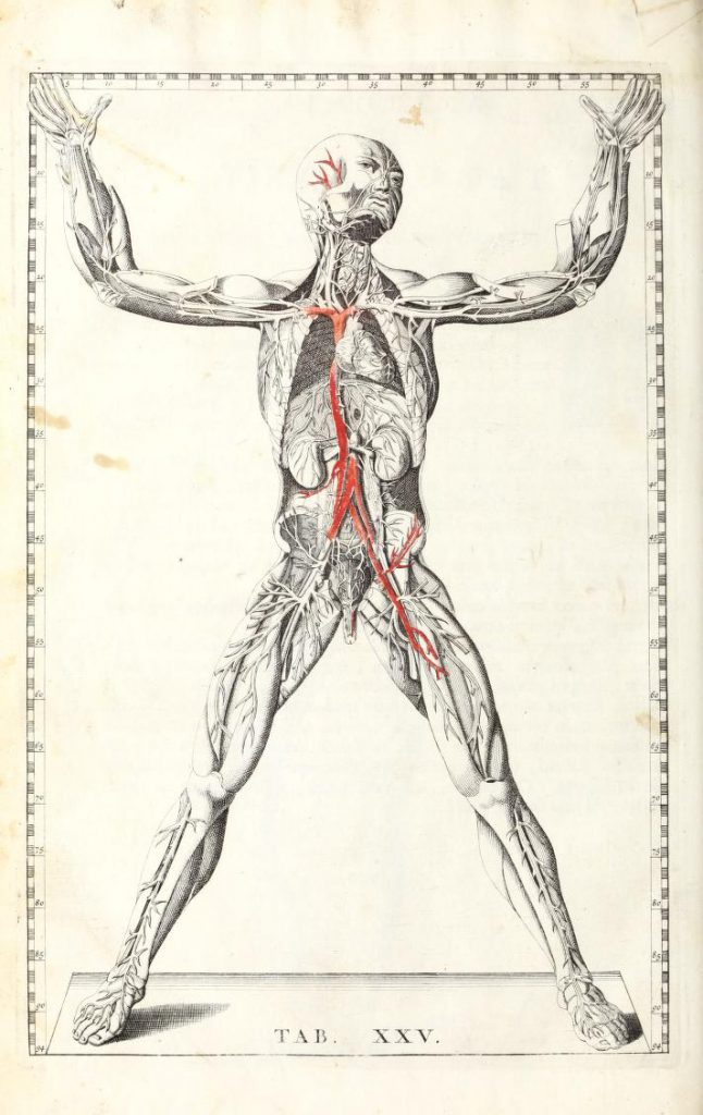 Illustration of a man's body with veins