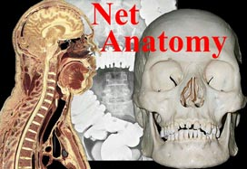 Net Anatomy